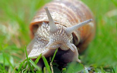 Śluz ślimaka – czy działa i dlaczego działa?
