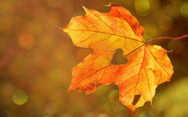 Galgant i dyptam – naturalne wsparcie dla serca