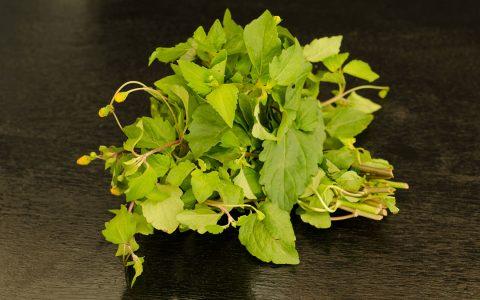 Znieczulnik (Acmella oleracea)